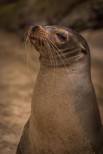 Close-up of seal at beach