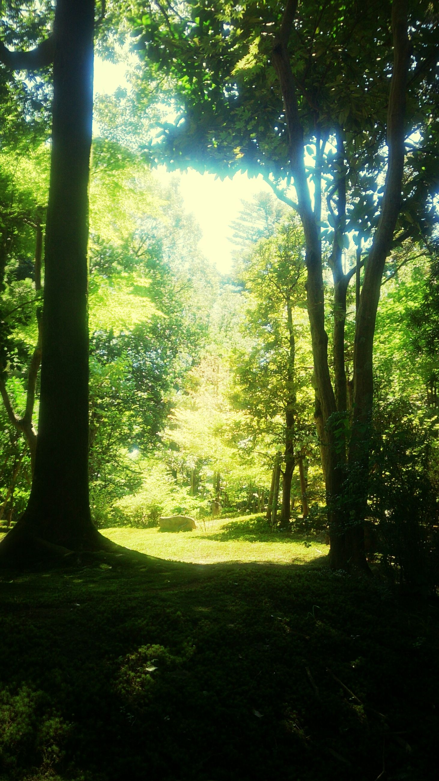 tree, tranquility, tree trunk, tranquil scene, growth, forest, nature, beauty in nature, scenics, sunlight, woodland, landscape, green color, branch, non-urban scene, shadow, idyllic, grass, day, lush foliage