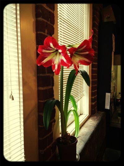 It Finally Bloomed <3