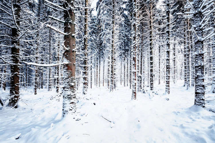Froozen forest Snow Winter Cold Temperature Tree Plant Land Beauty In Nature Tranquility Forest Nature Tranquil Scene No People White Color Day Scenics - Nature Covering Non-urban Scene Frozen Environment WoodLand Outdoors Pine Tree Coniferous Tree Icicle Harz