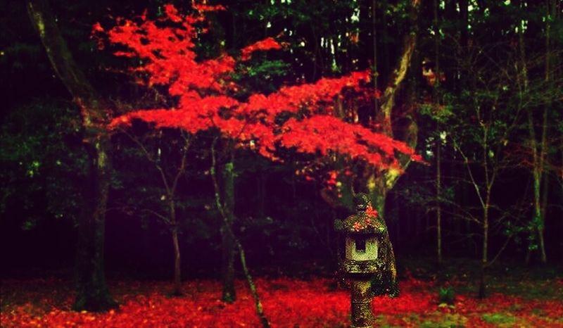 京都 紅葉 秋 禅