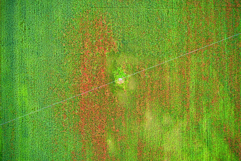 Wheat and poppies field seen from a drone; electrical wiring crossing the field Drone  Drone Photography Wheat Field Poppies  Poppies Field Red Color Green Color Agriculture From Above  High Angle View Serene Peaceful Abstract Earth Electricity  Electricity Pylon Plant No People Full Frame Nature Growth Day Beauty In Nature Tranquility Outdoors Tree Land Backgrounds Leaf Plant Part Scenics - Nature Tranquil Scene Landscape