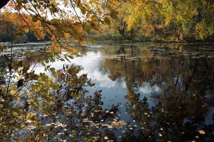Reflection of trees in lake during autumn