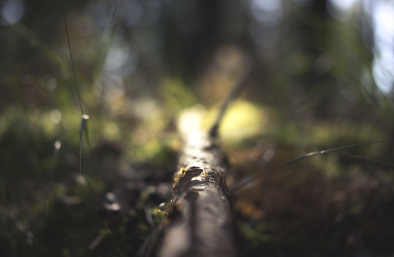 Atmosphere Branches Fallen Tree Premium Shallow Depth Of Field Swedish Forest To The Light Beauty In Nature Bokeh Close-up Day Depth Of Field Detailed Forest Forest Atmosphere Forest Bokeh Growth Large Nature No People Outdoors Selective Focus The Way Forward Tree Woodgrain