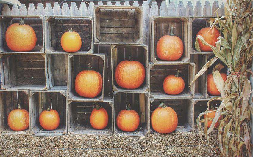 Pumpkins Favorite Season Fall Beauty Fall_collection Autumn🍁🍁🍁 Autumn 2015 America Coast To Coast Pumpkin!Pumpkin! Autumn Colors Colors Of Autumn