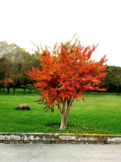 Tree Nature Beauty In Nature Growth No People Grass Outdoors