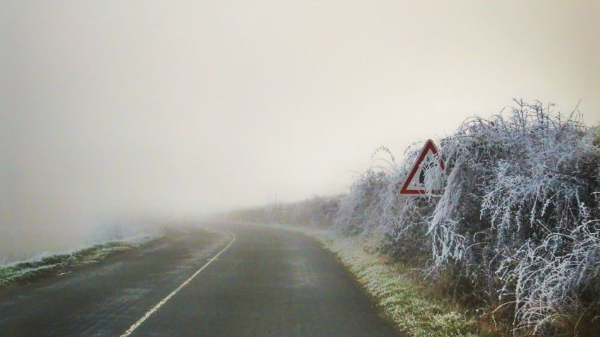 Tree Fog Transportation Winter Mode Of Transport Nature Cold Temperature Snow Road Land Vehicle Outdoors The Way Forward Landscape DayAllier Auvergne Canon Canonphotography Canonpowershot Beautiful Nature Beauty In Nature Road No People Beauty In Nature