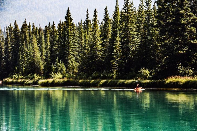 Bow River Canada Alberta Tree Water Beauty In Nature Reflection Scenics - Nature Real People Tranquil Scene Nature Two People Outdoors Forest Tranquility Day Waterfront