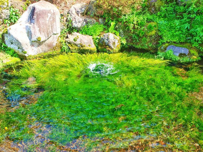 Japan Yamanashi Fujiyoshida Oshinohakkai Pond Transparency Water Plants Spring Water 山梨県 忍野八海