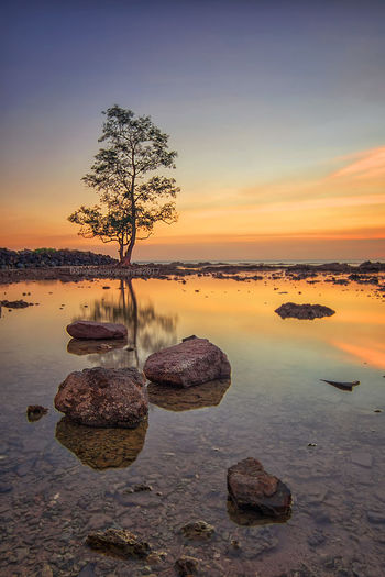 Single tree Beach Beauty In Nature Day Idyllic Nature No People Outdoors Reflection Rock - Object Scenics Sea Sky Sunset Tranquil Scene Tranquility Water