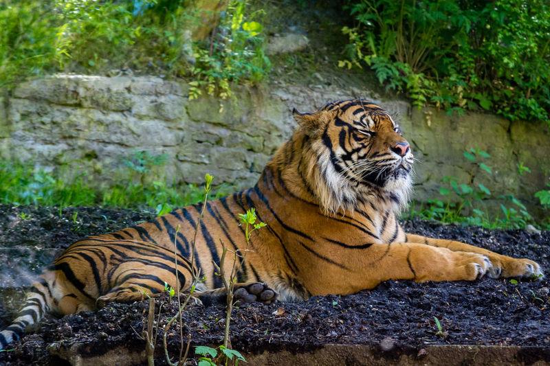 Cat relaxing on rock in zoo
