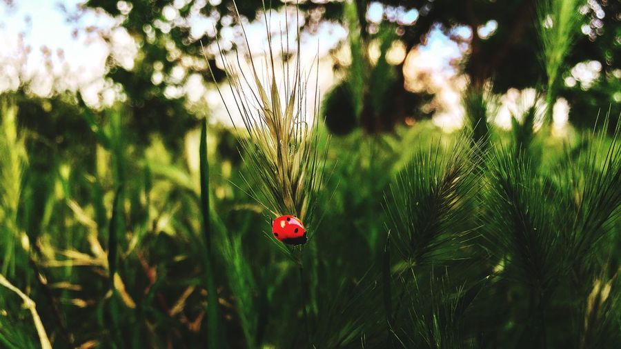 Plant Growth Green Color Day Nature Beauty In Nature No People Red Flower Animal Flowering Plant