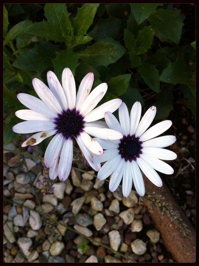 Beautiful Flowers White&purple Love Enjoying The Sun