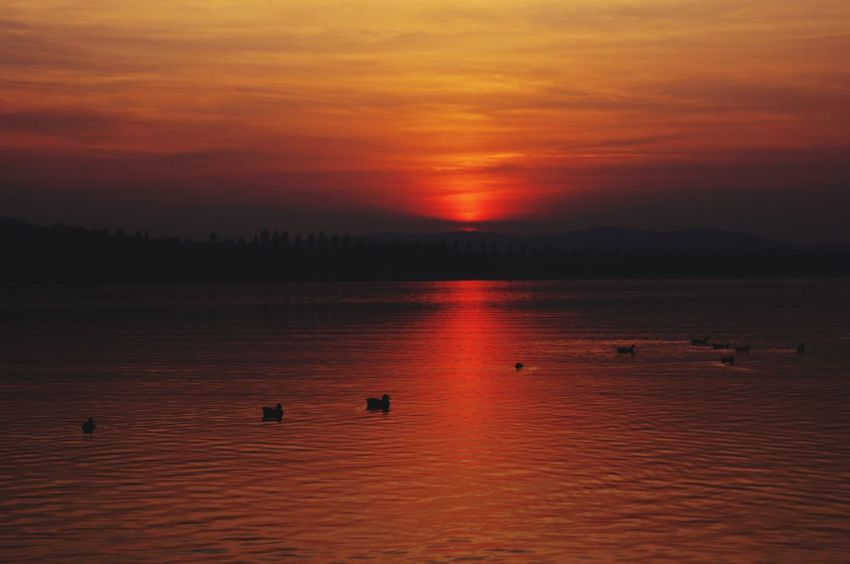 Sunset Sky Scenics - Nature Beauty In Nature Water Tranquil Scene Tranquility Orange Color Non-urban Scene No People Silhouette