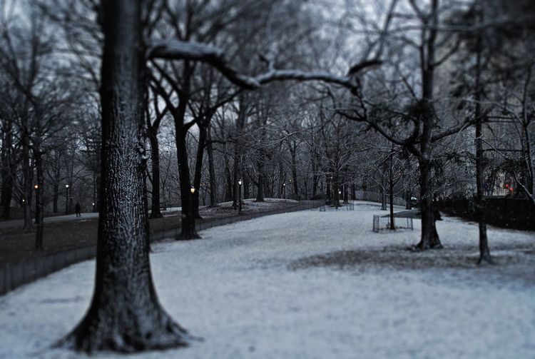 Travel EyeEmNewHere The Week On EyeEm Snow Winter Cold Temperature Tranquility Central Park