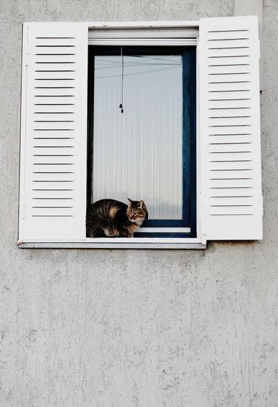 Domestic Cat Pets Domestic Animals Animal Themes Mammal One Animal Feline Window Cat No People Tortoiseshell Cat Carnivora Day Outdoors