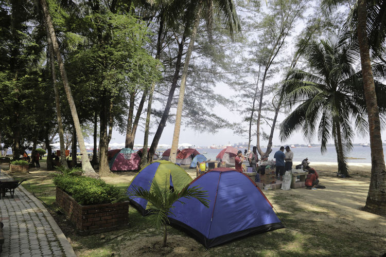 Camping Adventure Camp Site Camping Camping Out Camps Coconut Trees Seaside Travel