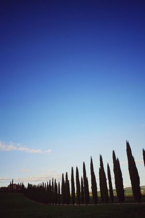 No People Sky Outdoors Blue Day Scenics Beauty In Nature Nature Val D'orcia Tuscany Casale Cypress Trees  Hill Cypresshill
