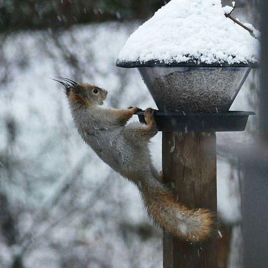 Orava ⛄ Snow Orava 😉 Finland Mänttä Tampere Soumi Talvi Marraskuu 😂