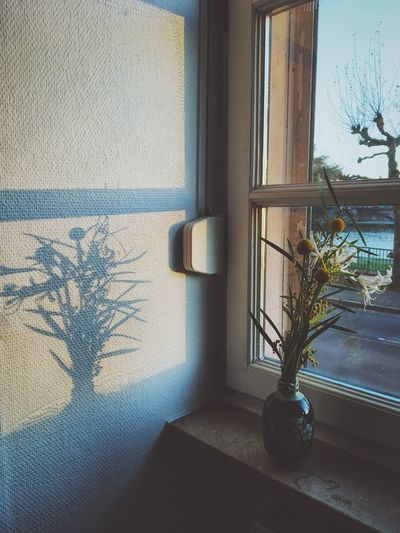 Plant Window Indoors  Home Interior No People Tree Shadow Nature Day Flowers Window View Window Frame Winter Wintertime Cold Close-up Shadows & Lights