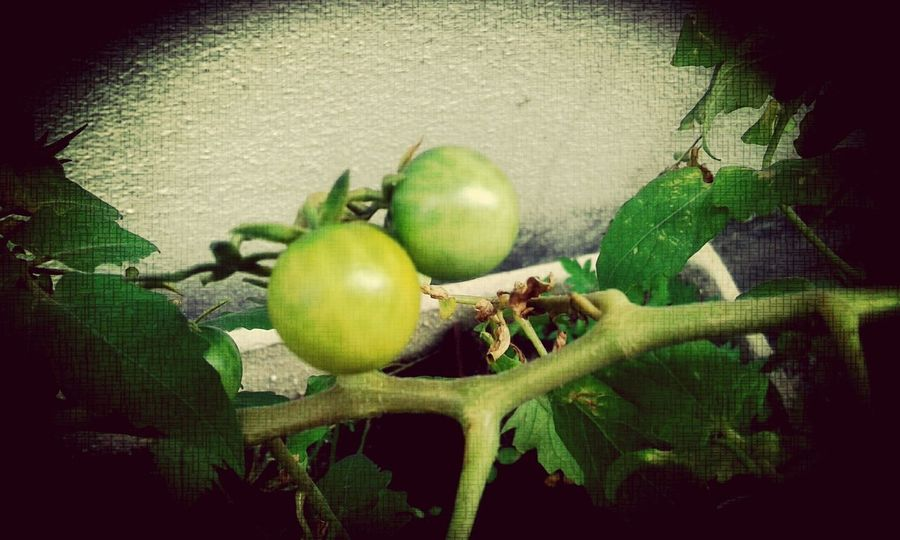 Beautiful Nature Fruits And Vegetables Frutas Tomato