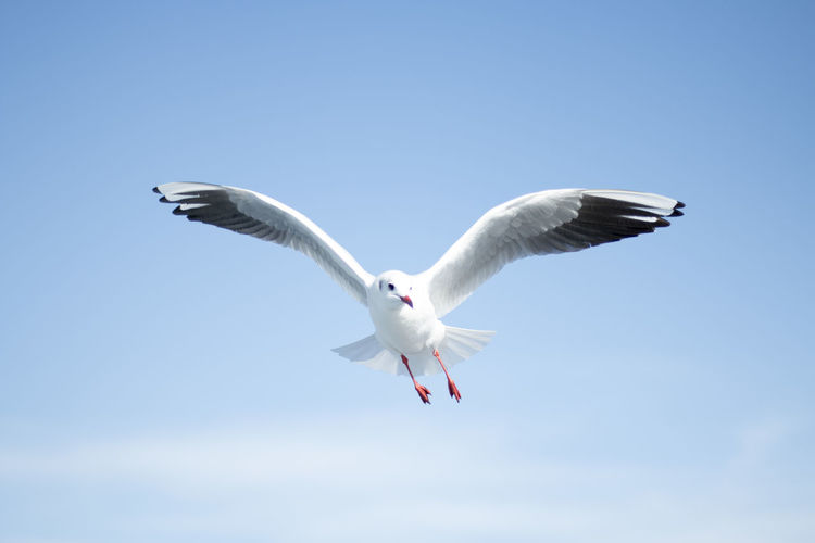 fly high Bird