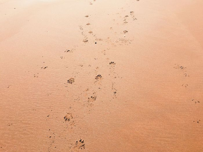 High Angle View Of Dog Footprints On Sand At Beach