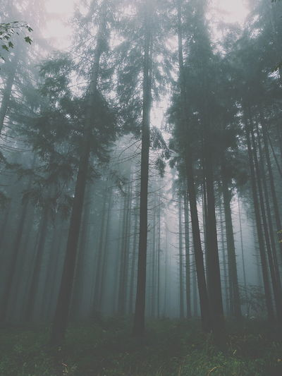 Trees In Forest During Foggy Weather