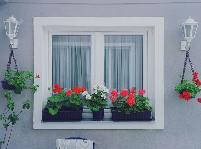 Flowers growing on window sill