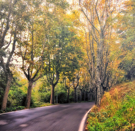 Autumn Street of rivoli Streamzoofamily Autumn EyeEm Nature Lover Landscape_Collection