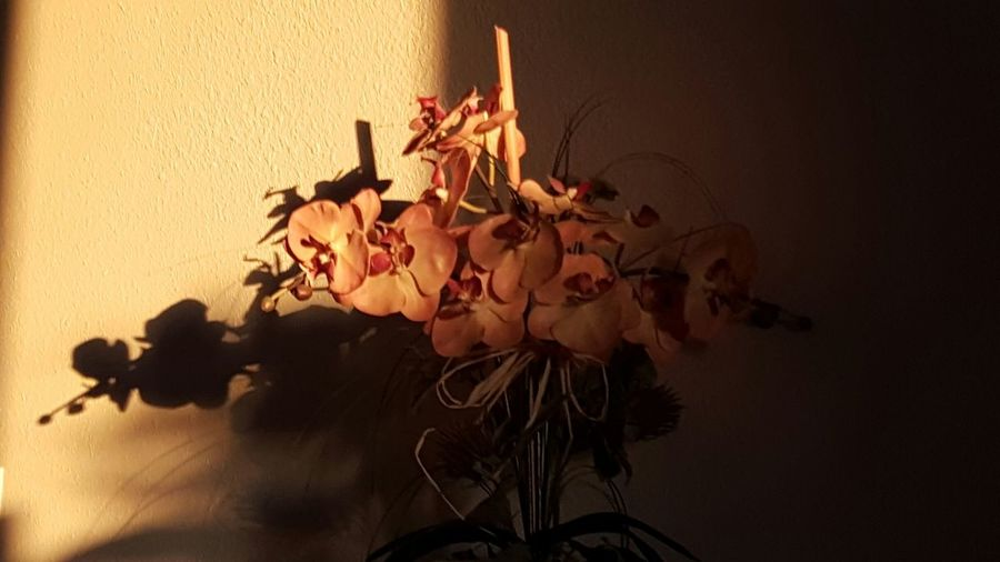 Floral Vase Flower Head Flower Arrangement Flower Sunset Silhouettes Sunsets Dramatic Lighting Golden Light Flower Wall - Building Feature Indoors  Fragility Vase Freshness Petal Bunch Of Flowers Rose - Flower Bouquet Close-up Flower Arrangement Flower Head Plant Beauty In Nature Orange Color Blossom