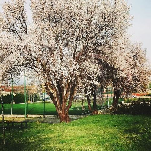 Spring Tree Green Flovers♥ Turkey💕 Gop Students My Life Lovely