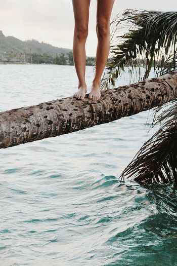 Low Section Of Woman Standing On Tree Trunk Over Sea