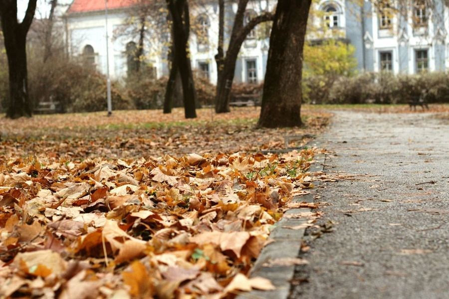 Tree Autumn Nature Leaf Change No People Outdoors Tranquility Beauty In Nature Day Close-up Park Path Trees City