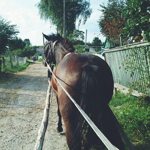 Я полюбил лошадей за это время Trip Village Nicetime