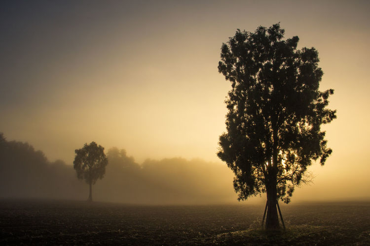 Fog Beauty In Nature Cold Could  Country Life Countryside Dawn Field Fog Foggy Hazy  Mist Misty Morning Nature No People Outdoors Rural Scene Solitude Sunrise - Dawn Temperature Tranquil Scene Tranquility Tree