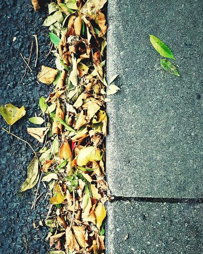This Is Autumn day 24. Leaves On The Road Roadside Curbside Curb Things On The Ground Leaf Outdoors Pavement