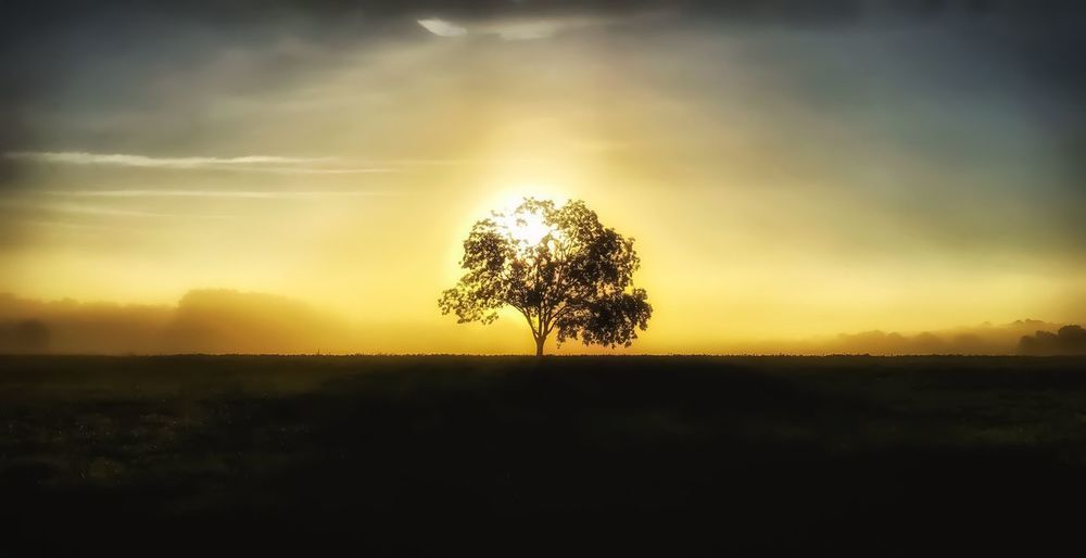 Good morning 🌅🌞 Sunrise Morning Walking Around Beauty In Nature Tranquility Nature Landscape Silhouette Lone Scenics Sky Field Sun Tree Daydreaming Ethereal Taking Photos Stillness Fog Autumn Rural Scene Solitude Softness Cloud - Sky
