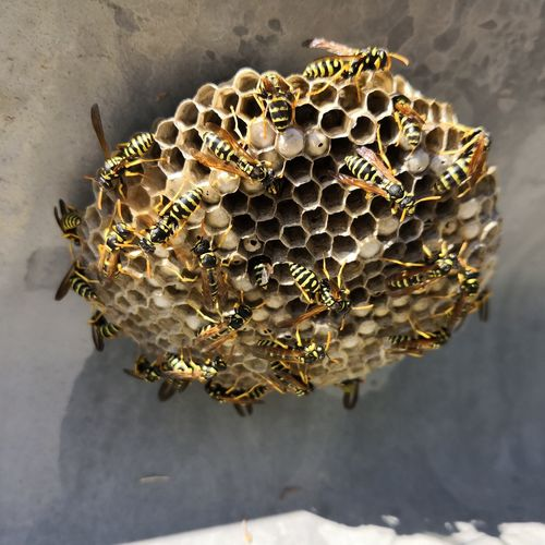 EyeEm Selects APIculture Honeycomb Bee Beehive Insect Colony Close-up Animal Themes