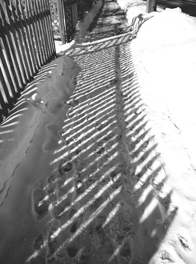 Fence Shadow On Snow