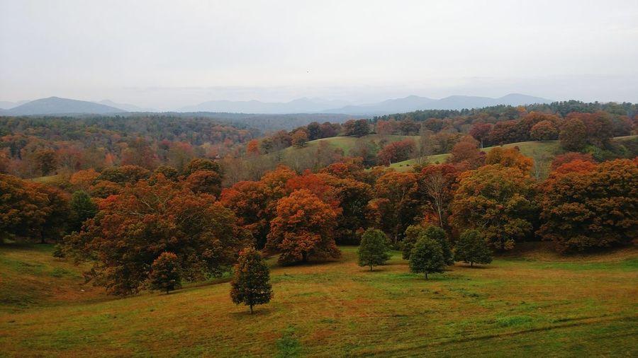 Mountains Autumn Asheville North Carolina Leaves Autumn Leaves Autumn Colors First Eyeem Photo