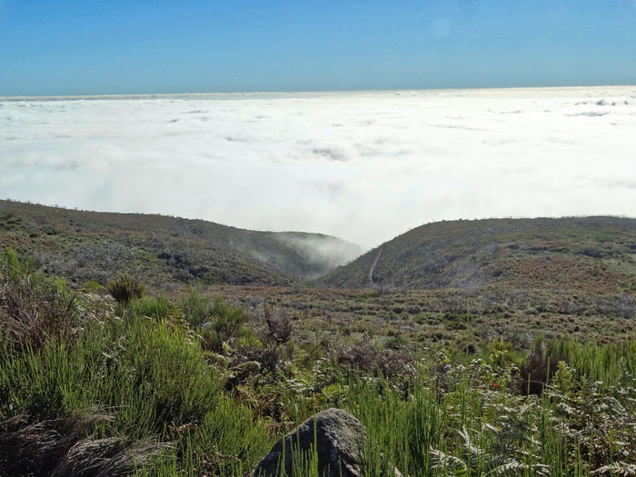 Above the clouds. Sky Beauty In Nature Tranquil Scene Scenics - Nature Tranquility Landscape Cloud - Sky Plant Environment Nature Land Mountain No People Day Non-urban Scene Remote Idyllic Growth Outdoors Water Madeira Madeira Island Edge Of The World Above The Clouds