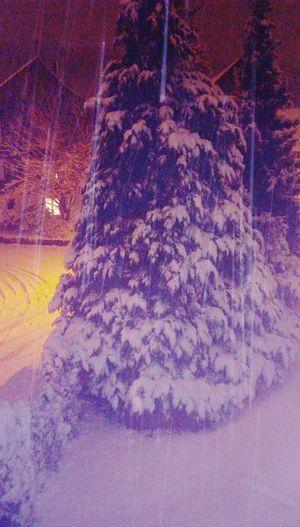 Pine Tree Snow