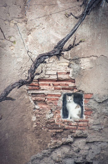 Cat Domestic Cat Feline Mammal One Animal Domestic Domestic Animals Pets Wall Vertebrate No People Architecture Sitting Wall - Building Feature Day Built Structure Nature Brick Wall Old Buildings Small Window Looking
