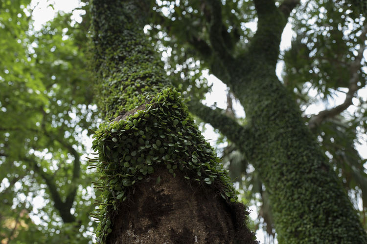 Plant Tree Growth Tree Trunk Trunk Low Angle View Green Color Nature Day Beauty In Nature No People Tranquility Focus On Foreground Outdoors Forest Branch Land Moss Close-up Leaf