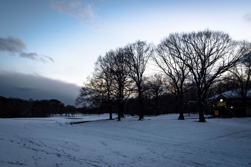 Prospect park after snow fall Snow Sky Tree Beauty In Nature Nature Outdoors Landscape Scenics Prospect Park Brooklyn NYC