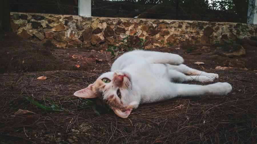 Pets Dog Close-up Cat Sleeping Kitten Pet Bed Ginger Cat Stray Animal