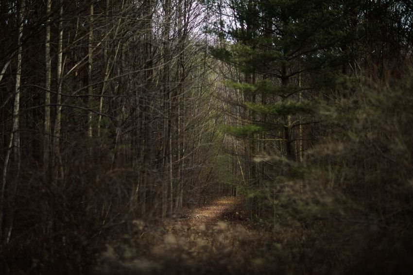 Somber Moody Trail WoodLand Forest Tree Nature No People Tranquil Scene Adventure Outdoors Day