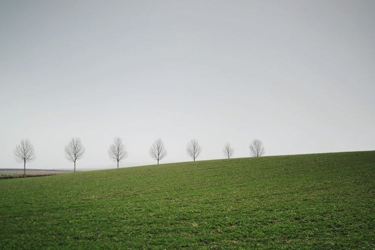 treetrunk In A Row Tree Trunk Nature Photography Beauty In Nature My Point Of View Foggy Morning Tree Rural Scene Clear Sky Cold Temperature Winter Agriculture Bare Tree Field Sky Grass Cultivated Land Farmland Agricultural Field Countryside