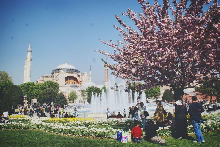 ıstanbul Istanbul Istanbul City Türkiye Turkey Mosquee Islam Islamic Architecture Agia Sofia Ayasofya (Hagia Sophia) Ayasofya Hagia Sophia